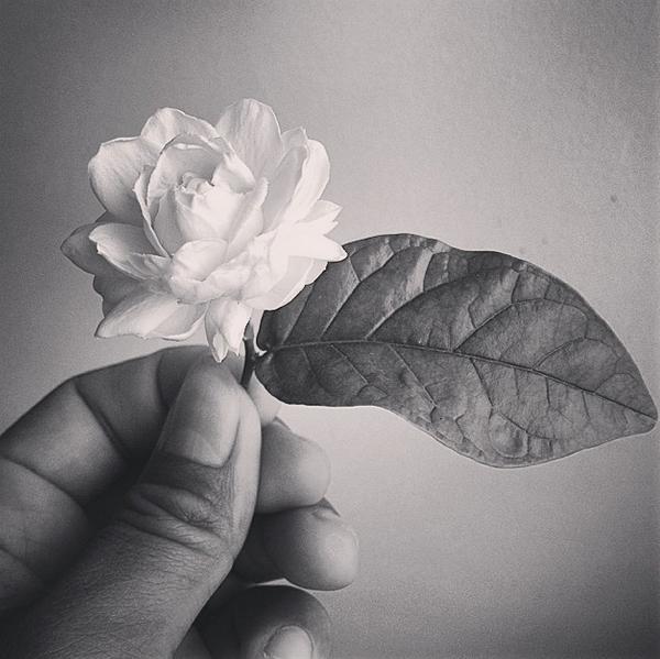 ดอกมะลิ: ดอกไม้ประจำวันแม่