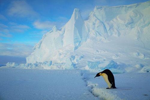 น้ำแข็งขั้วโลกละลายเร็วขึ้น