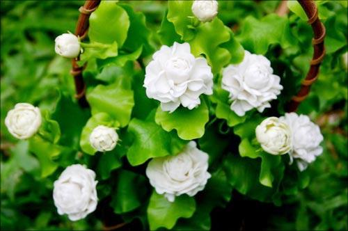 ดอกมะลิสัญลักษณ์ประจำวันแม่