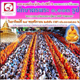 The Morning Alms Round to 1,113 Monks in Chom Thong Chiang Mai