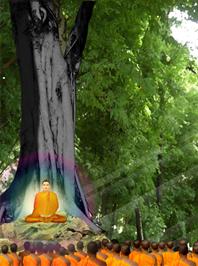 มาฆบูชา วันสำคัญทางพระพุทธศาสนา