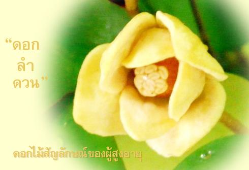 ดอกลำดวน ดอกไม้วันผู้สูงอายุ